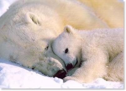 熊の親子.jpg