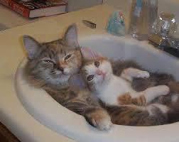 猫の親子.jpg