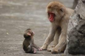 猿の親子.jpg