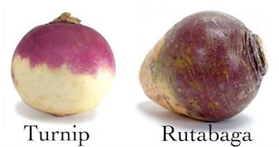 Turnip Rutabaga.jpg