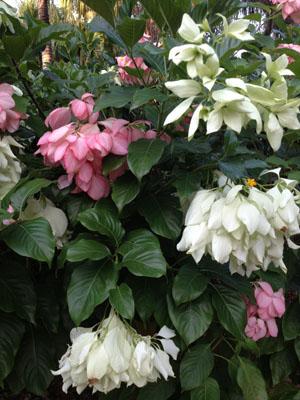地元ニュース:The Florida Botanical Gardens