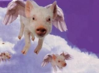 FlyingPig.jpg