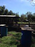 Southtampa farm5.jpg