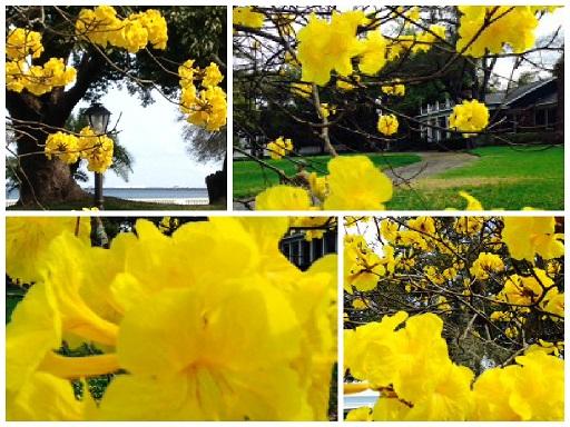 collage yellow flower 2015.jpg