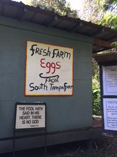south tampa farm 2016 5.JPG
